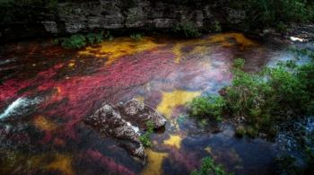 Columbia. Caño Cristales - the river of five colors