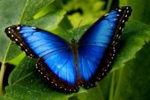 Коста-Рика где выращивают бабочек